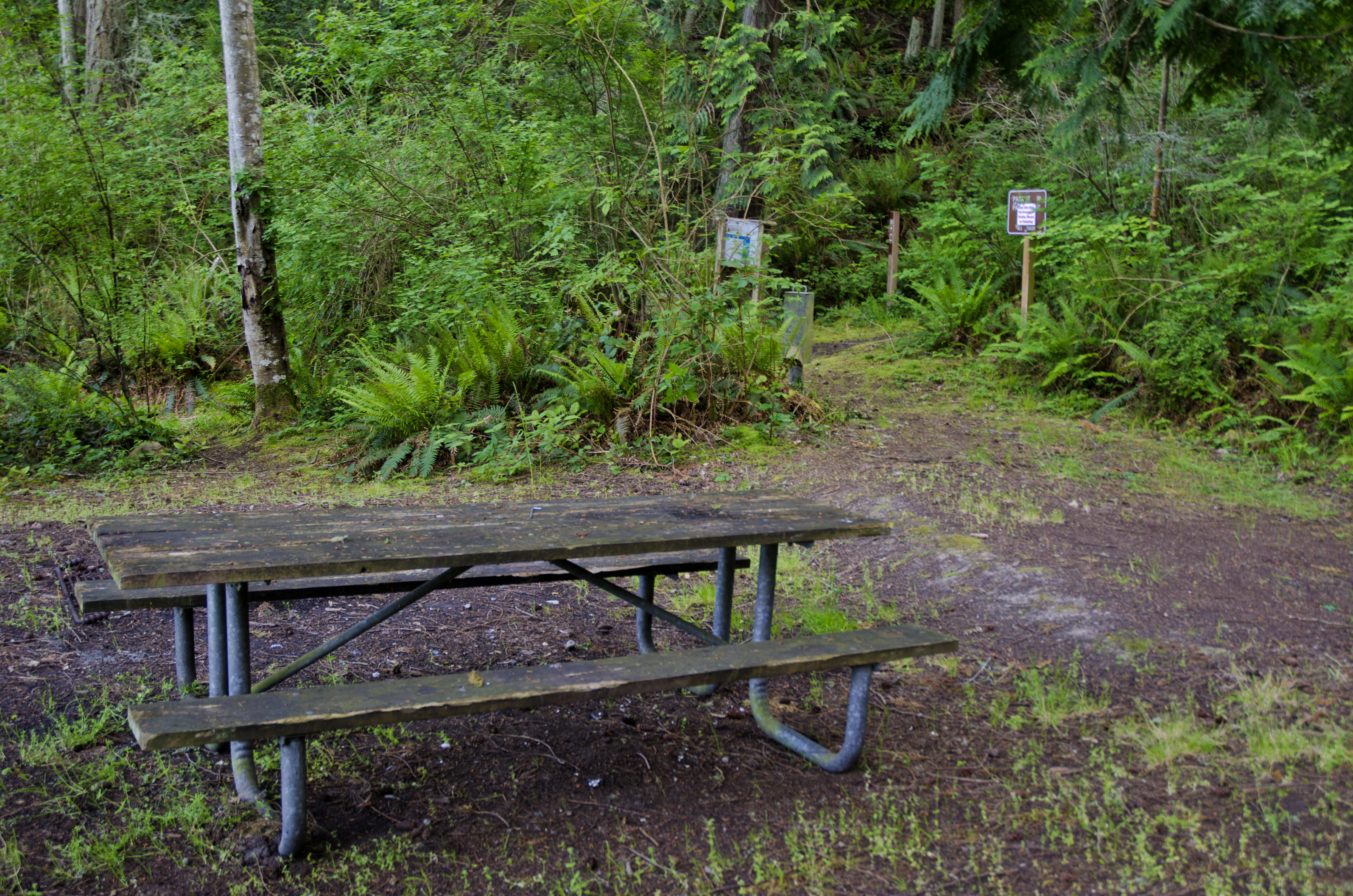 Picnic Table Burrows